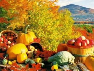 Качественные семена и удобрения
